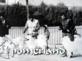 Grupo de Cría de Villaodón 1989