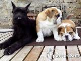 Cachorros de Pomerland y Crusheds
