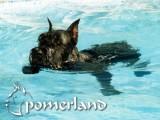 Ch. Puskin de Pomerland