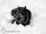 Winny de Pomerland entre la nieve