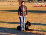Ghorgolyan de Pomerland-BH